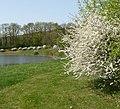 Golf im Frühling - panoramio.jpg