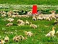 Goose Slade Farm - geograph.org.uk - 917614.jpg