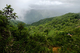 Grand Bois National Park