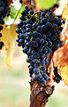 Grapes02 crop.jpg