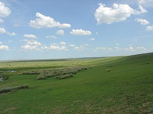 Central asian steppe grasslands