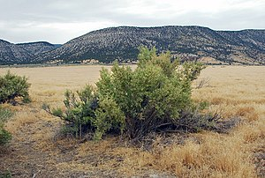 San Pitch Mountains - View of east section of the mountains, from Sanpete Valley