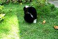 Green Garden in Puppy.jpg