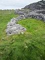 Green Grass at Black Fort (6030543053).jpg