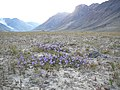 Greenland - panoramio (52).jpg