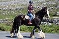 Hästar på Aran-5094 - Flickr - Ragnhild & Neil Crawford.jpg