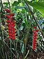 HI Oahu Waimea Valley19.jpg