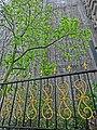 HK 北角半山 North Point Mid-Levels 雲景道 77 Cloud View Road 雲峰 Summit Court fence n tree Apr-2014 ZR2.JPG