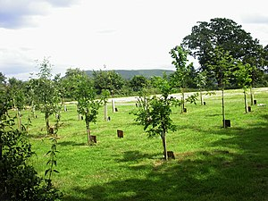 English: Hamdown Woodland Burial Ground. Hambl...