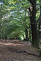 Hampstead Heath - geograph.org.uk - 1005689.jpg