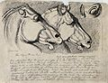 Heads of the horses in the Elgin marbles. Etching by J. Land Wellcome V0020860.jpg