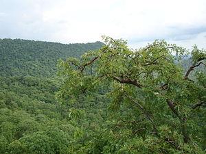 Kabirdham district - Flora of Kabirdham District