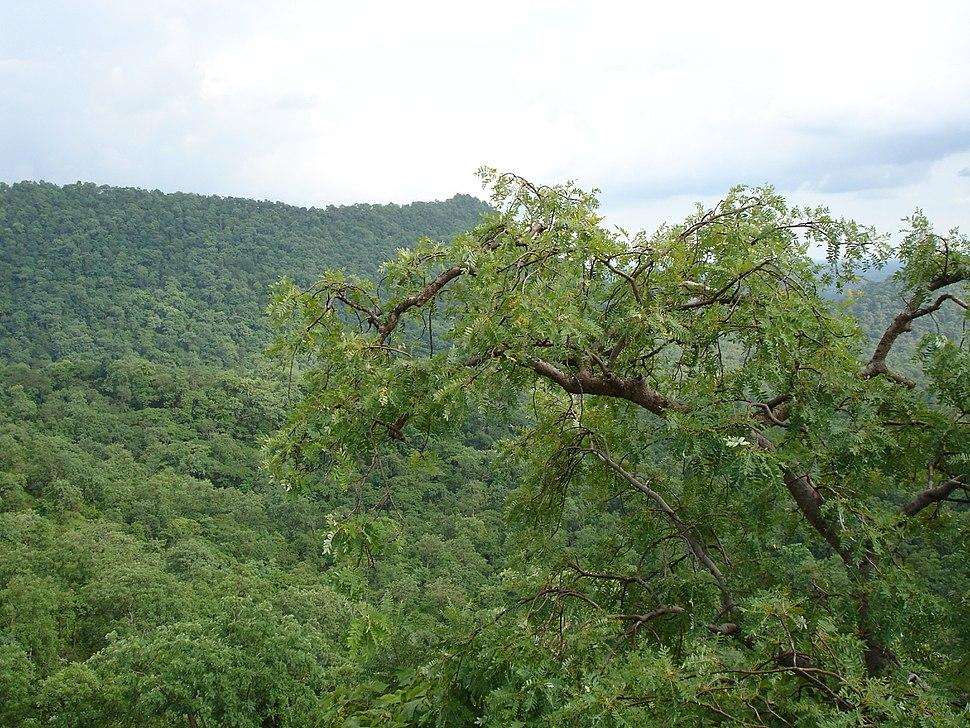 Healing Flora of Kabirdham District