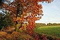 Herstkleuren in Visdonk - panoramio.jpg