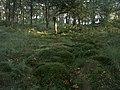 Hidden Stream - panoramio.jpg