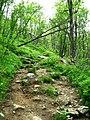 Hike track to the Hivjufossen.jpg