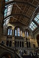 Hintze Hall Natural History Museum 6.jpg
