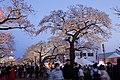 Hitachi Sakura Festival, Ibaraki 15.jpg