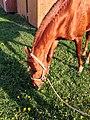 Horse 2529.jpg