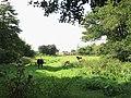 Horses grazing pasture - geograph.org.uk - 1493103.jpg