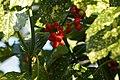 Hortus Botanicus Leiden Early Spring - Stinzenplanten (13037883854).jpg