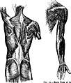 Human physiology (1907) (14765842274).jpg