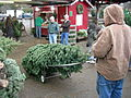 Hunter's Tree Farm 04.jpg