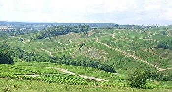 IMG Vignoble de Chateau-Chalon 1.JPG