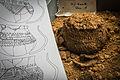INRAP présentation fouilles Obernai 6000 ans occupation 24 octobre 2013 27.jpg