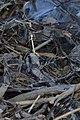 Ice on the Banks of the Grand River - Kitchener, Ontario 04.jpg