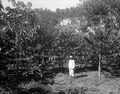 Ilang-Ilang. S-te Marie de Marovoay. Madagaskar - SMVK - 021953.tif