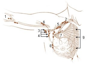 Axillary lymph nodes - Image: Illu lymph chain 03