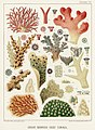 Illustration from The Great Barrier Reef of Australia (1893) by William Saville-Kent from rawpixel's own original publication 00008.jpg
