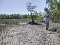 Images from Bali Island Sunderbans IMG 20171112 103048.jpg