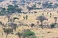 Impressions of Serengeti (113).jpg