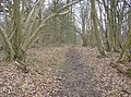 In The Gully - geograph.org.uk - 345865.jpg