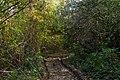 In the forest near Ubezhenskaya - panoramio (21).jpg