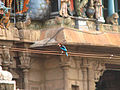 India - Wildlife - 001b (1871618214).jpg