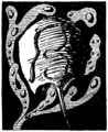 Initial at p. 171 in Just So Stories (c1912).png