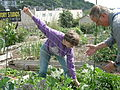 Interbay P-Patch gardeners 04.jpg