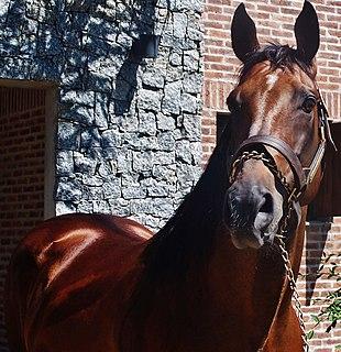 Invasor (horse) Argentine Thoroughbred racehorse