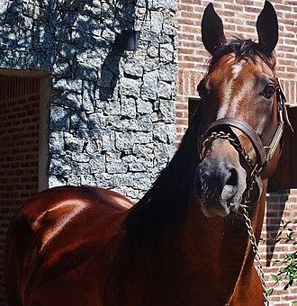Invasor (horse) - Image: Invasor 2015