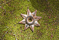 Iron-star hg.jpg