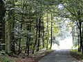 Iserlohn, Germany - panoramio (19).jpg