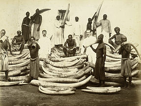 Men standing among piles of elephant tusks