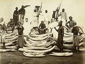 Men standing among piles of elephant tusks