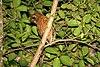 Jamaican Owl 2506951138.jpg