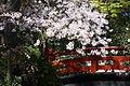 Japanase Garden Bridge (3389340794).jpg