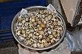 Japanese quail Coturnix japonica eggs by Dr. Raju Kasambe DSC 3217 02.jpg