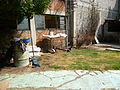 Jardín con Gallos 1.JPG